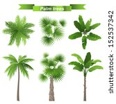 3 different palm trees   top... | Shutterstock .eps vector #152537342