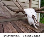 cattle skull with horns sitting ... | Shutterstock . vector #1525575365