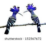 Blue Birds  Color Transparency...