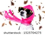 Stock photo chic fashionable diva luxury cool dog with funny sunglasses scarf and necklace isolated on white 1525704275