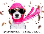 Stock photo chic fashionable diva luxury cool dog with funny sunglasses scarf and necklace isolated on white 1525704278
