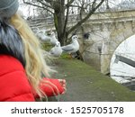 Girl Feeds Seagulls  Seine...