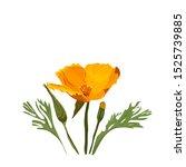 California Orange Poppy Flower  ...