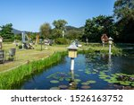 Tropical Water Lily Pond In...