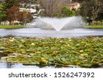 Lily Pad In Pond With Fountain