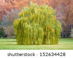 weeping willow tree on park in... | Shutterstock . vector #152634428