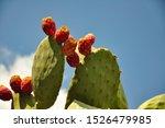 Fruit Of Cactus  Opuntia  ...