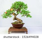 Chinese Bonsai With Fruit...