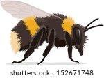bumble bee  realistic vector... | Shutterstock .eps vector #152671748