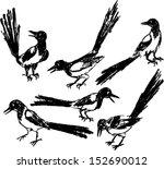 vector set of drawing wild bird ... | Shutterstock .eps vector #152690012