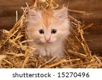 Young Kitten Into Straw
