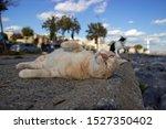 beautiful street cat is posing... | Shutterstock . vector #1527350402