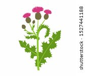 Vector Branch With Thistle Or...