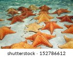 plenty of cushion starfish on a ... | Shutterstock . vector #152786612