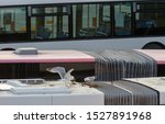 Stock photo pair of herring gulls start nest building on top of roof of the the public transport bus in 1527891968