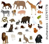animal set 1   Shutterstock .eps vector #152797778