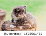 Stock photo a scared kitten stands on a log little kitten on the street fluffy kitten pets 1528061492