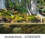 Riparian Habitat Ecosystem Of...
