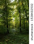 Small photo of Beautiful forest landscape in deciduous forest. Sunny morning in the deciduous forest