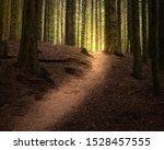 Path Through A Mysterious...