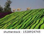 Sheep Walking On Colorful Beac...