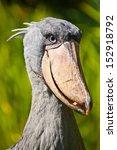shoebill  abu markub ... | Shutterstock . vector #152918792
