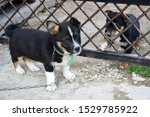 Stock photo two fluffy friendly puppies are separated by a metal gate puppies are sad they want to play in 1529785922