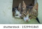 Stock photo mother cat with her kitten in a box both sticking out their heads only 1529941865