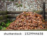 Compost Full Of Dried Autumn...