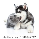 Stock photo playful siberian husky puppy bites a kitten s ear isolated on white background 1530049712
