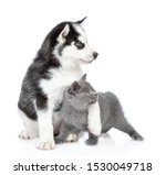 Stock photo siberian husky puppy embracing british kitten and looking away together isolated on white 1530049718