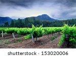 hunter valley vineyards  | Shutterstock . vector #153020006