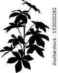 home plant black  silhouette.... | Shutterstock .eps vector #153020282