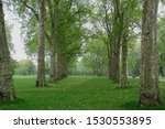Shady Alley Of Plane Trees In...