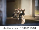 Stock photo kittens in the window of an abandoned house abandoned kittens in old house 1530897518