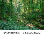Lush Green Rainforest Landscape ...