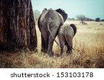 Stock photo tanzania tarangire national park mother and baby elephant 153103178