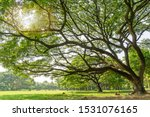 The Greenery Leaves Branches Of ...