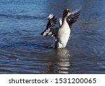 Grey Goose Waves Wings Amid...