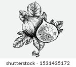 fig  hand draw vector line black | Shutterstock .eps vector #1531435172