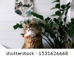 Stock photo cute cat sitting under green plant branches and relaxing on wooden shelf on white wall backgroud in 1531626668