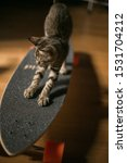Stock photo kitten stretching on a skateboard 1531704212