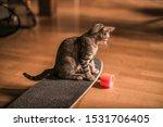 Stock photo kitten sitting on a longboard 1531706405