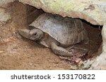 Gopher Tortoise Burrowed In It...