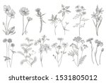 collection of hand drawn... | Shutterstock .eps vector #1531805012