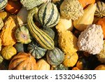 Gourds. Various Types  Sizes...