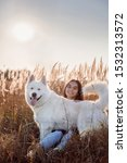 Stock photo dog on a walk the breed is a samoyed husky the dog has a white thick coat 1532313572