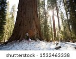 Sequoia National Park, California/USA - Feb 17 2013: Park guest visit and hug the General Sherman tree, the world's largest tree, a giant sequoia, in Sequoia National Park.  - stock photo