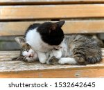 Stock photo two kittens are sleeping together one of them is lying on the other one close up sisters cats 1532642645