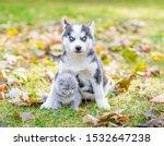 Stock photo baby husky puppy hugging a kitten in autumn park 1532647238